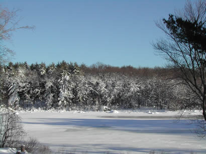 Picture of the pond in our backyard during the day after the big storm
